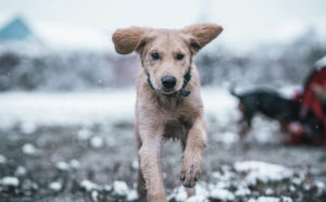 Puppy Training Near Me Northern Virginia